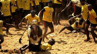Jallikattu Live Update: Supporters in Tamil Nadu demand ban on PETA