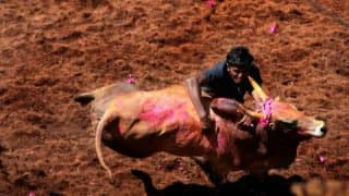 Jallikattu Organised in Madurai; One Lakh People Expected to Witness Bull Taming Sport in  Palamedu, Allanganallur and Avanipuram