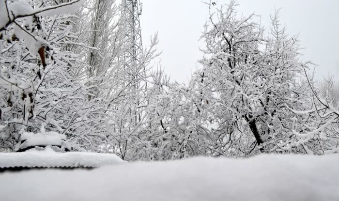 Jammu and Kashmir shivers as Kargil freezes at -11.2 °C