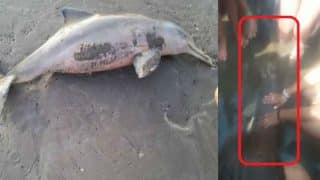 Baby Dolphin dies because of people's selfie obsession once again! Watch tragic video