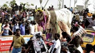 Bucks behind the bull: Here's how Jallikattu impacts Tamil Nadu's economy