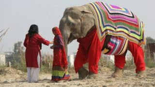 Elephants in north India get colourful sweaters as gift from caregivers to beat dipping temperatures!