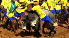 Jallikattu row: SC agrees to Centre's request to delay verdict on the bull taming sport