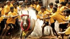 Jallikattu Event Live News Updates from Madurai:  Alanganallur event cancelled due to protests, O. Panneerselvam  will inaugurate sport at Natam Kovilpatti
