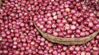 Onion Prices Fall 35% to Rs 900 Per Quintal After I-T Raids in Nashik, Farmers Halt Sale