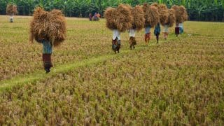 Cabinet Increases MSP by Record Rs 200 Per Quintal For Kharif Crops; Sensex Closes 267 Points up