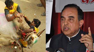 'জাল্লিকাট্টু পশু নির্যাতন হলে হালাল মাংসও বন্ধ হোক'