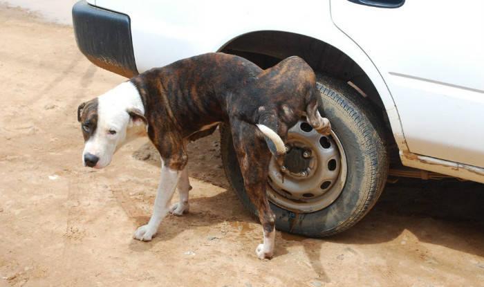 अपने गली-मोहल्लों में अक्सर देखा होगा, चलती गाड़ी के पीछे कुत्ते भौंकते हुए दौड़ने लगते हैं....(प्रतीकात्मक फोटो)