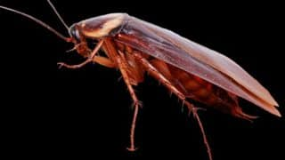 Bizarre: Man Tries to Kill Cockroaches With Flamethrower and Accidentally Burns House