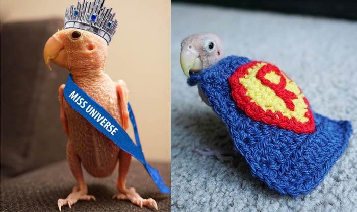 naked-bird-sex