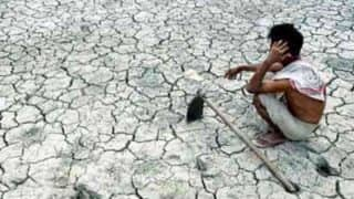 Punjab farmer suicides: Over 80 per cent of those who committed suicide were cotton growers, claims study