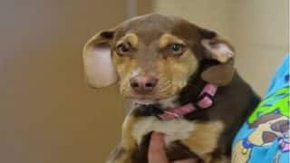 Former shelter dog saves 3-year-old girl in Michigan