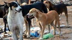 Dogs eat up 70-year-old female patient admitted at Government Hospital Rajgarh in Madhya Pradesh