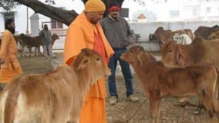 CM Yogi Adityanath visits cow shelter in home turf Gorakhpur