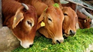 Alwar Killing: Police Recover 'Tyreless Truck' With One Dead Cow, Deny 'Gau Raksha' Angle