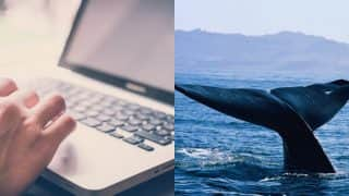 Blue Whale Challenge: CBSE Issues Guidelines For Safe Internet Usage