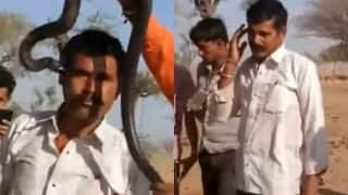 Man poses with a cobra for a selfie in Jodhpur, dies in an hour after being bitten
