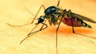 Gujarat: 387 Dengue Cases Recorded in Just 22 Days, Says Report