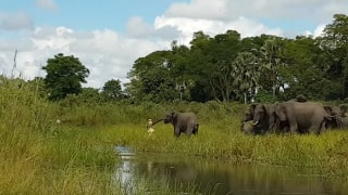 मगरमच्छ ने अपने जबड़े में जकड़ ली नन्हें हाथी की सूंड, वीडियो देखकर रह जाएंगे हैरान