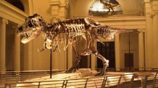 Tyrannosaurs face covered in scaly protective layer, has high degree of tactile sensitivity, reveals study