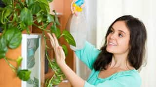 5 house plants that detoxify your homeand give you better sleep