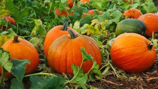 Pumpkin Benefits In Hindi: सेहत के लिए बेहद फायदेमंद है कद्दू, जानें इसके 7 बेमिसाल फायदे