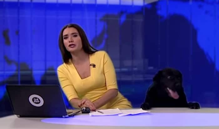 Dog interrupts news broadcast in Russian Federation, video goes massively viral