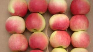 India Decision to Increase Tariff on Apples to Hit US Growers, Say Congressmen