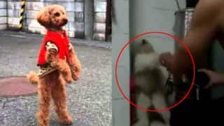 Dog walking on hind legs go viral, here is why you should not share it (Watch Video)