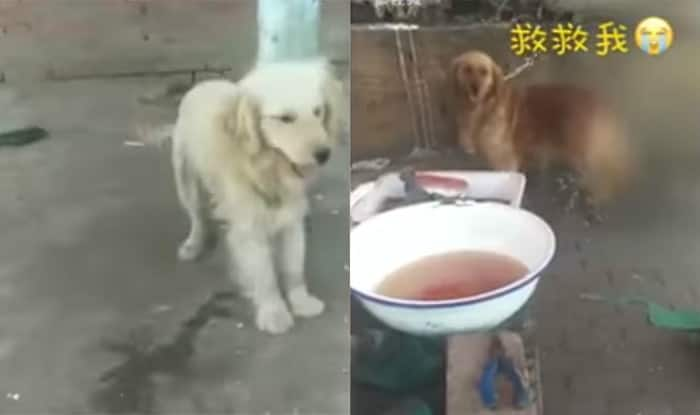 Chinese slaughter house demand Rs 14000 to spare dogs from