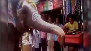 Jumbo the elephant from Madhya Pradesh walks to betel shop everyday to eat paan (Watch Video)