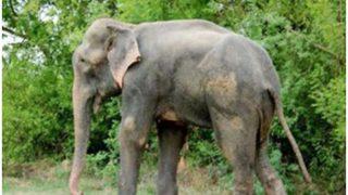 जंगली हाथी ने CRPF के दो जवानों को कुचला, मौत