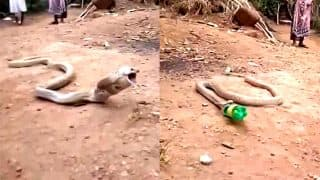 Cobra spits swallowed plastic bottle in Goa (Watch Video)