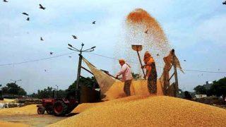 पिछले साल से 7 फीसदी ज्यादा गेहूं उत्पादन का अनुमान : IIWBR