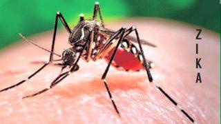 Zika virus enters India: Identify Symptoms & remedies, Steps to take for precautions against mosquito-borne disease