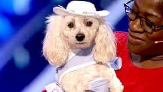 This contestant from America's Got Talent Season 12 is a dog who can count (Watch Video)