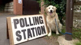 #DogsAtPollingStations: Adorable animals waiting outside polling stations as human's vote become UK election trend (See Pictures)