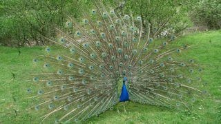 Here Are 6 Places in India Where Birds Like Peacocks Are in Abundance