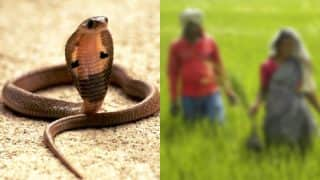 Shocking! Man in Bihar bites wife after getting bitten by snake so they could die together