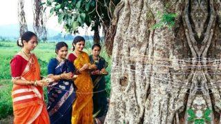 Hariyali Amavasya 2019: बहुत महत्वपूर्ण होती है श्रावण अमावस्या, जानें तिथि, पूजन विधि...