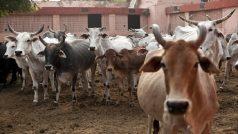पंजाब में गाय, कुत्ता, बिल्ली पालने पर लगेगा टैक्स, सरकार ने जारी किया नोटिफिकेशन