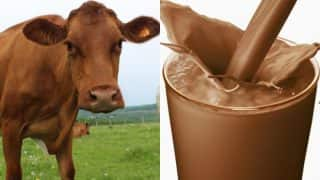 Brown cows give Chocolate milk? Too many American adults believe in this myth