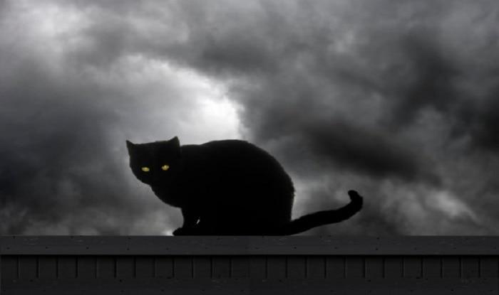 बिल्ली रास्ता काट दे तो क्यों रुक जाते हैं आप? क्यों माना जाता है अशुभ?