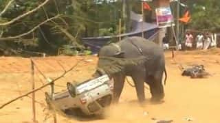 Angry Elephant flipped over a car at  Ambalapura festival in Thrissur, Kerela (Watch video)