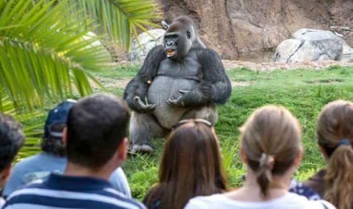 Funny Zoo Memes : Twitterati found a philosophical gorilla giving ted talk and made it