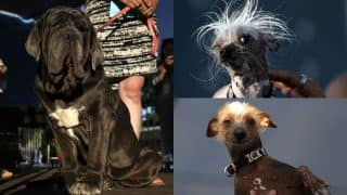 World's Ugliest Dog 2017 is Martha: See pics of Neapolitan Mastiff winner along with other ugly dogs in competition