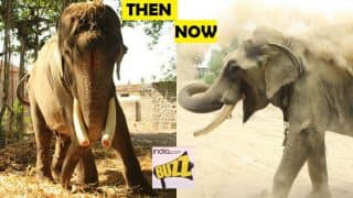Indian elephant unchained from Hindu Temple after 50 years of suffering! Pictures show Gajraj is happy after being rescued