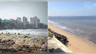 Mumbai's once dirtiest beach, Versova gets a makeover with 300 coconut trees after being cleaned