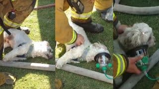 Firemen Rescued a Puppy From a Burning House in California! The Heartwarming Video Will Restore Your Faith in Humanity!