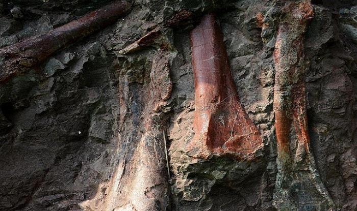 China's Dinosaur Fossil Wall in Chongqing May be the World's Biggest Jurassic Site, Say Scientists